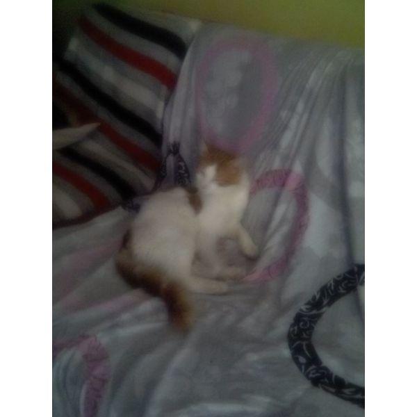 charizonte gatoulinia
