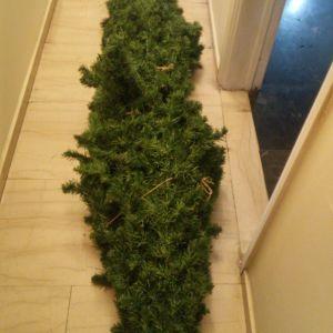 Πωλείται Χριστουγεννιάτικο Δέντρο