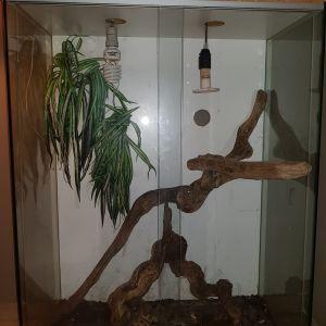 Γυάλινο terrarium για ιγκουάνα και ερπετά